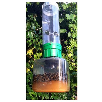 Hervorragend Insektenvernichter günstig kaufen - Wespenfalle WaspBane für eine HA98